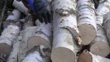 Cutting birch firewood with a chainsaw — Stock Video
