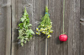 Medical herbs flowers and red apple on wall — Stock Photo