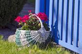 Beautiful decorative basket with flowers in yard — ストック写真