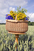 Midsummer still-life with basket and medical herbs flowers — Stock Photo