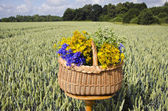 Midsummer still-life with basket and medical herbs  on wheat field — Stock Photo
