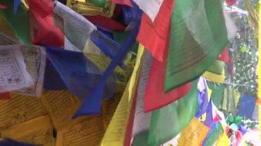 Beautiful Buddhist praying flags on tree in Lumbini, Nepal — Vidéo