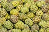 Fresh artichoke in asia market — Zdjęcie stockowe