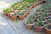 Flowerpots with various flowers seedlings — Stock fotografie