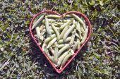 Gousses de pois frais en panier en osier de forme coeur — Photo