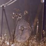 Dewy summer end spider-web on farmland field — Stock Photo #61778485