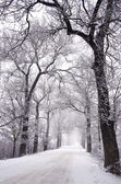 Empty rural winter road with tree alley and fog — Stock Photo
