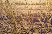 beautiful winter hoarsfrost on  plants and sunrise sunlight — Stock Photo