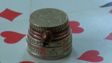 Luck symbol ladybird ladybug on money metal coins and playing cards — Stock Video
