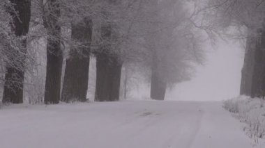 Winter rural snowy road with alley  old trees and  magic fog — 图库视频影像
