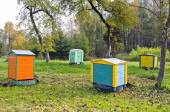 Honey bee hives in autumnal apple garden — Stock Photo