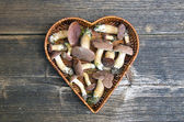 Mushrooms fungi cep boletus Xerocomus badius in heart form basket — Stock Photo