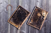 Two old honeycomb bee comb and rusty horseshoe on wall — Stockfoto