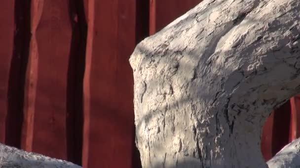 Whitened old apple tree near farm house wall — Vidéo