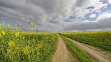 Rapeseed field and rural gravel road . Farmland landscape, timelapse 4K — Vídeo stock