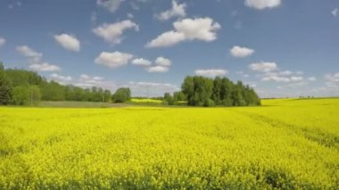 Beautiful rapeseed blossoming yellow field and clouds motion. Timelapse 4K — Stock Video