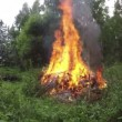 Campfire fire flame on summer farm meadow near pond. Timelapse 4K — Stock Video #78376748