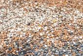 Variety of pebble — Stock Photo