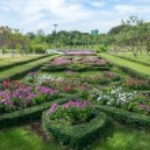 Flower shrub — Stock Photo #64516675