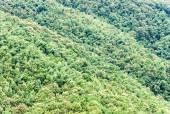 チークの森 — ストック写真