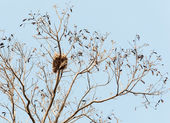 Small nest — Stock Photo