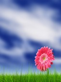 Flower over a blue sky background — Stock Photo
