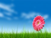 Flower over a blue sky — Photo