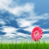 Grass field and a flower — Stock Photo