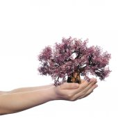 Hand holding a pink spring tree — Stock Photo