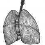 Wireframe mesh respiratory system — Stock Photo #68657545