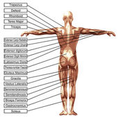 3D man with muscles — Stock Photo