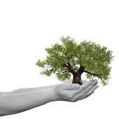 Conceptual  hand holding  tree — Stock Photo