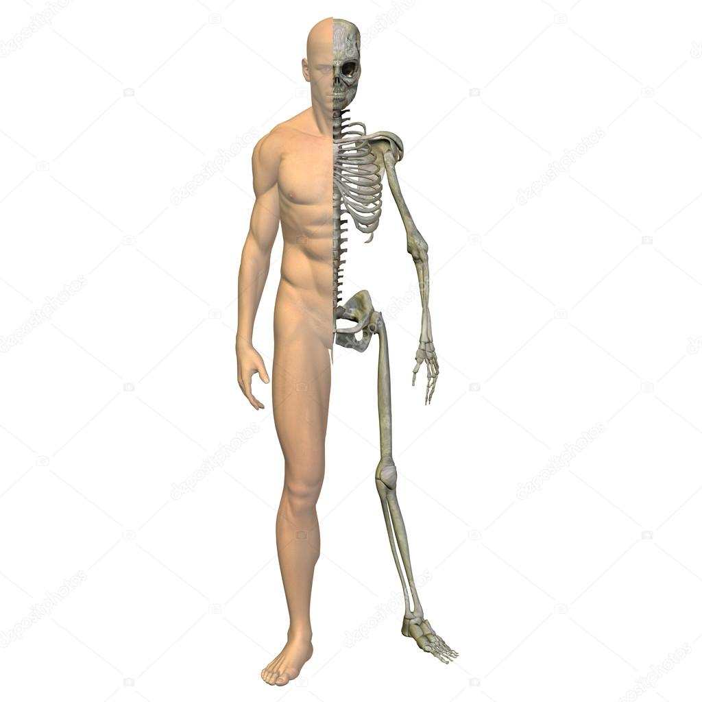 Testeo Muscular Download