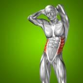 Conceptual  chest human anatomy — Stock Photo