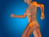 Conceptual human  anatomy — Stock Photo