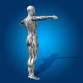 Člověk nebo man 3d anatomie těla s svalů pro zdraví — Stock fotografie