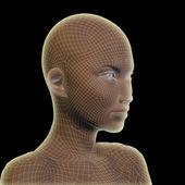 Wireframe human female head — Stock Photo