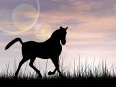 Beautiful black horse silhouette in grass — Φωτογραφία Αρχείου