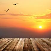 Sunset  with seagulls and wood planks floor background — Photo
