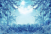 Winter background with icy branches in the foreground — Stock Photo