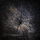 烧焦的树桩特写作为背景 — 图库照片