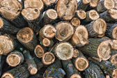 Big pile of logs lying in a field — Stock Photo