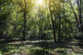 Small clearing in the forest lit by the sun — Stock Photo