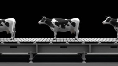 Cows on the conveyor belt — Stock Video