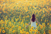 Girl in sunflowers — Stock Photo