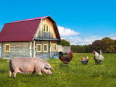 Farm animals pig and chickens — Stock Photo