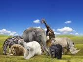 Wild  animals group — Stock Photo