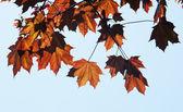 Jesienne liście na drzewie — Zdjęcie stockowe
