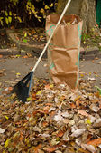 Bagging fall Leaves — ストック写真