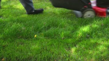 Mowing Summer Lawn — Stock Video